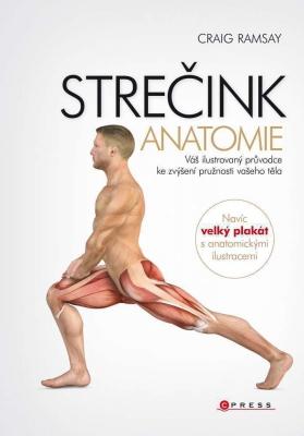 Strečink - anatomie